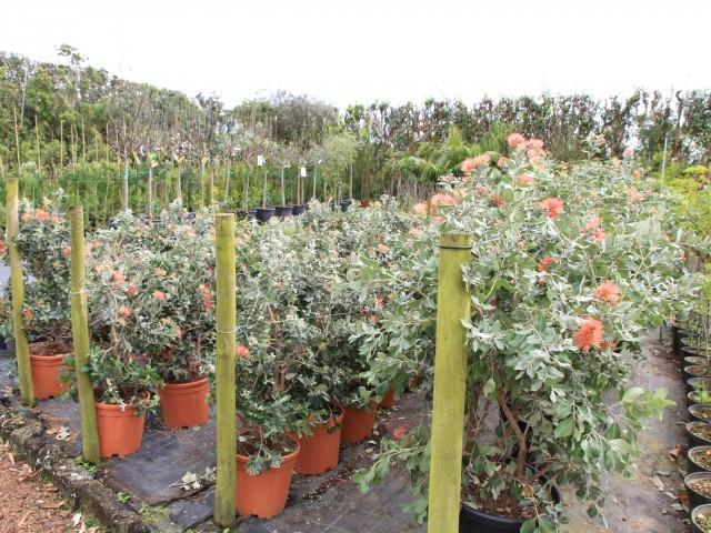 Pode encontrar no nosso viveiros, um leque diversificado de plantas