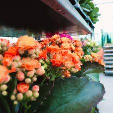 Jardim Campo Fotos-19